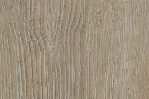 scarlet-oak-50230